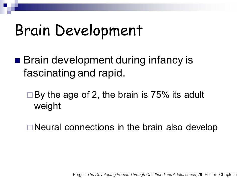 Brain Development Brain development during infancy is fascinating and rapid. By the age of 2, the brain is 75% its adult weight.