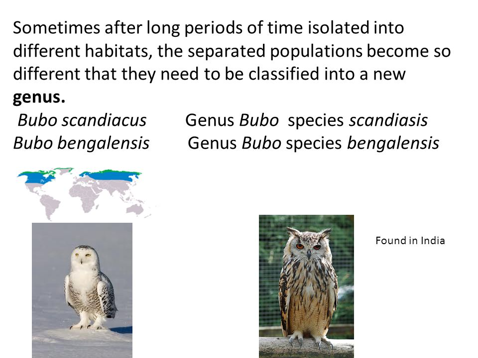 Sometimes after long periods of time isolated into different habitats, the separated populations become so different that they need to be classified into a new genus. Bubo scandiacus Genus Bubo species scandiasis Bubo bengalensis Genus Bubo species bengalensis