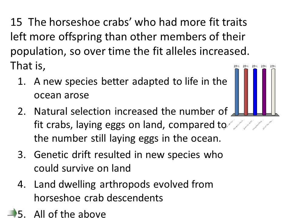 15 The horseshoe crabs' who had more fit traits left more offspring than other members of their population, so over time the fit alleles increased. That is,
