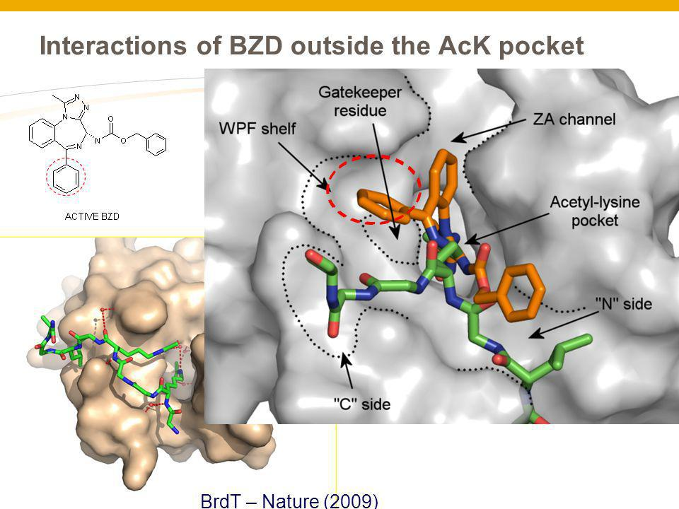 Interactions of BZD outside the AcK pocket