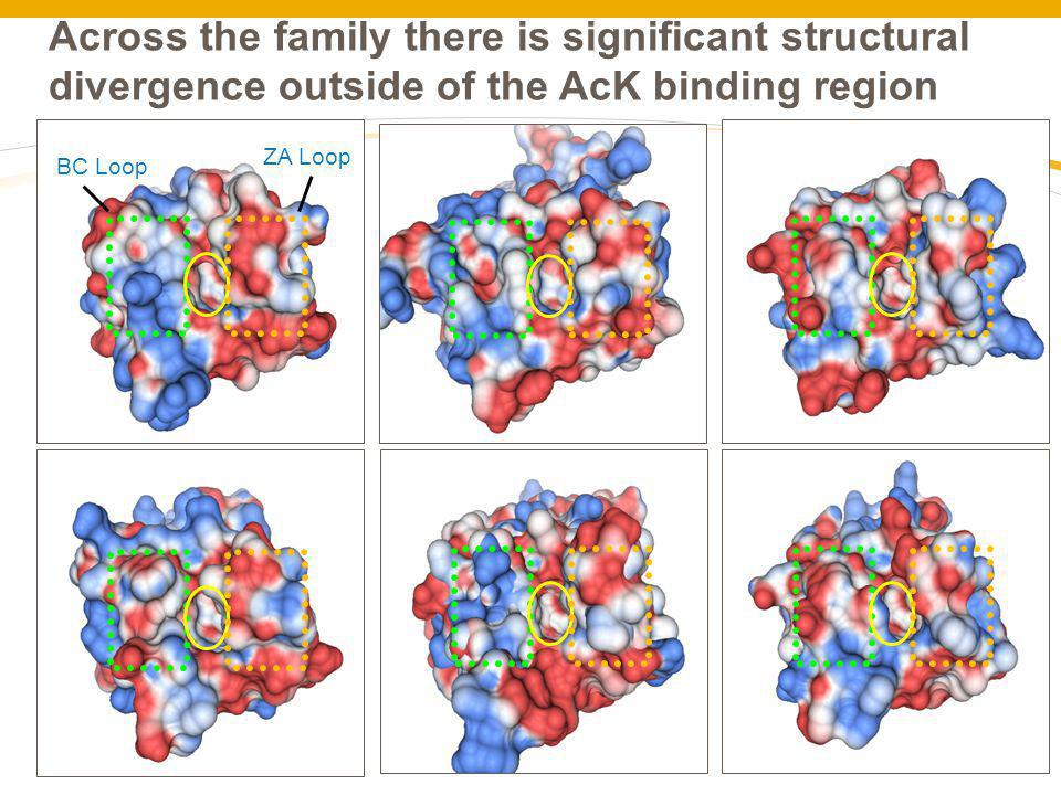 Across the family there is significant structural divergence outside of the AcK binding region
