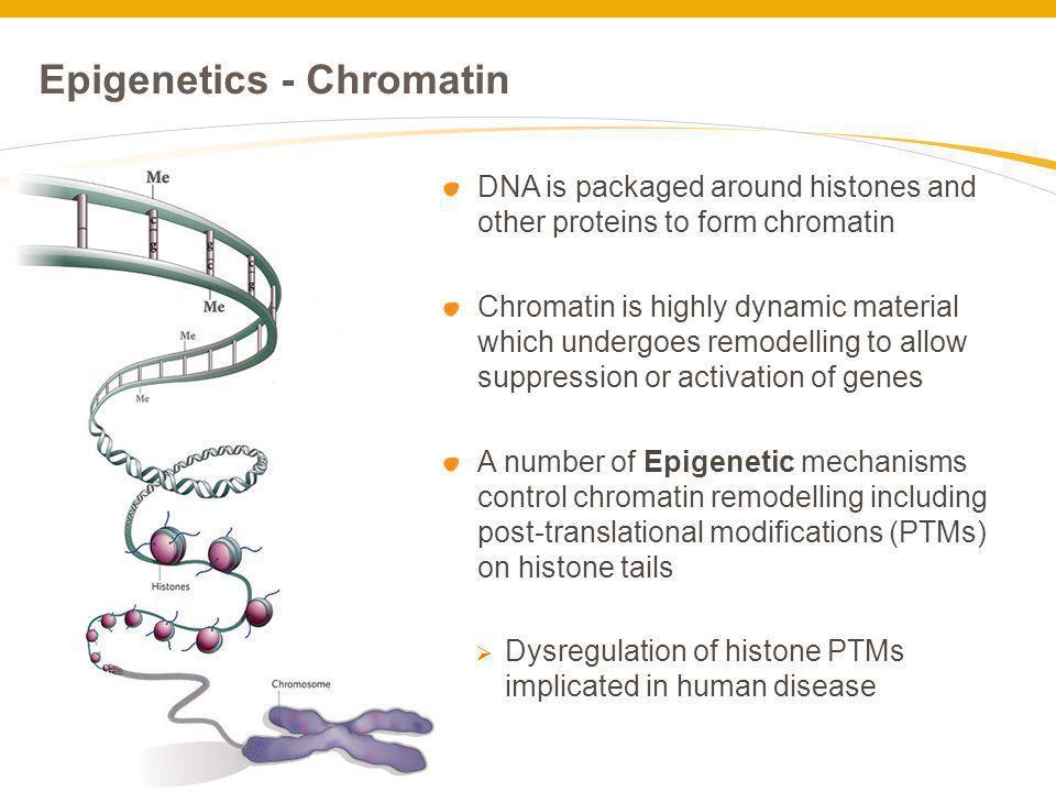 Epigenetics - Chromatin