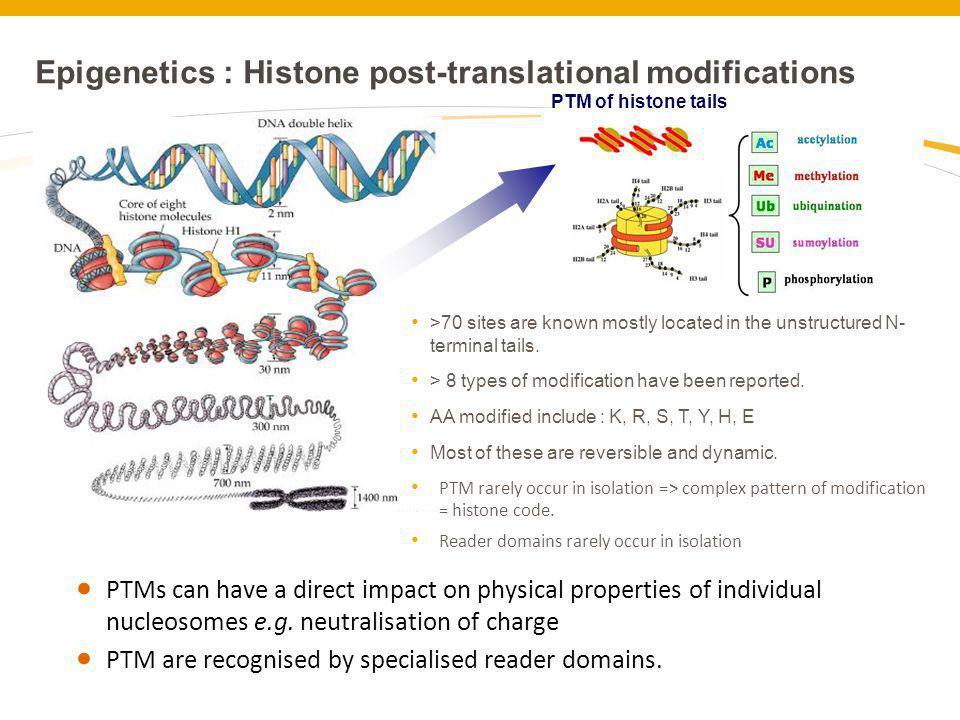 Epigenetics : Histone post-translational modifications
