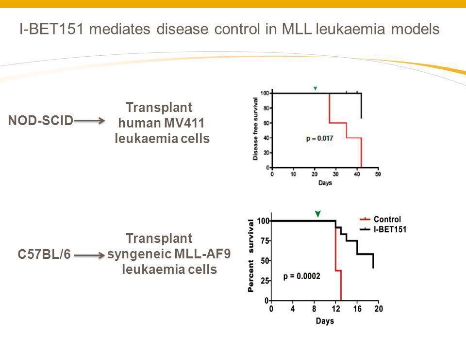 I-BET151 mediates disease control in MLL leukaemia models