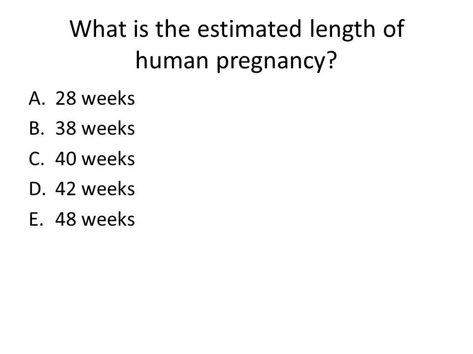 What is the estimated length of human pregnancy