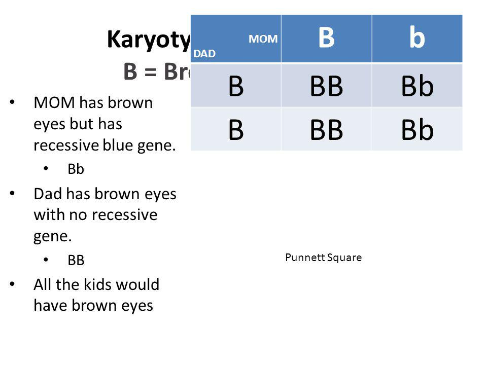 Karyotyping: Eye Color B = Brown b = blue