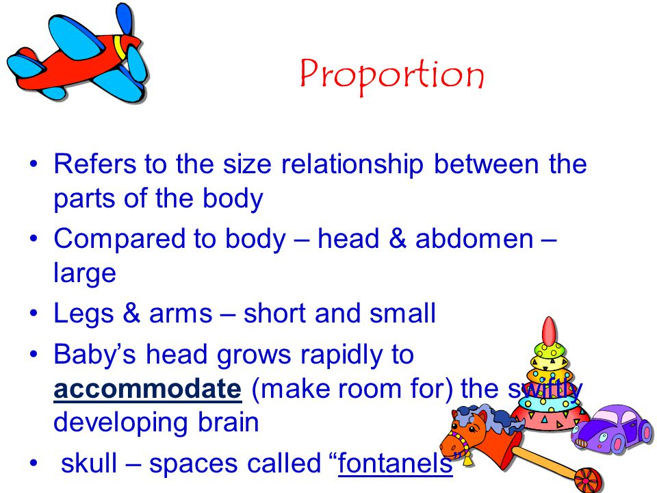 Proportion Refers to the size relationship between the parts of the body. Compared to body – head & abdomen – large.