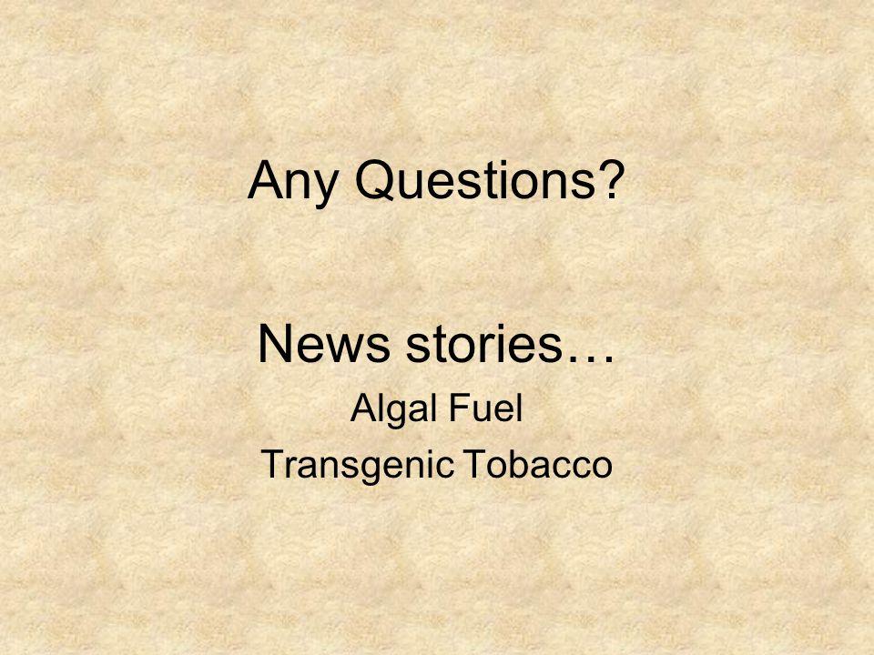 Any Questions News stories… Algal Fuel Transgenic Tobacco