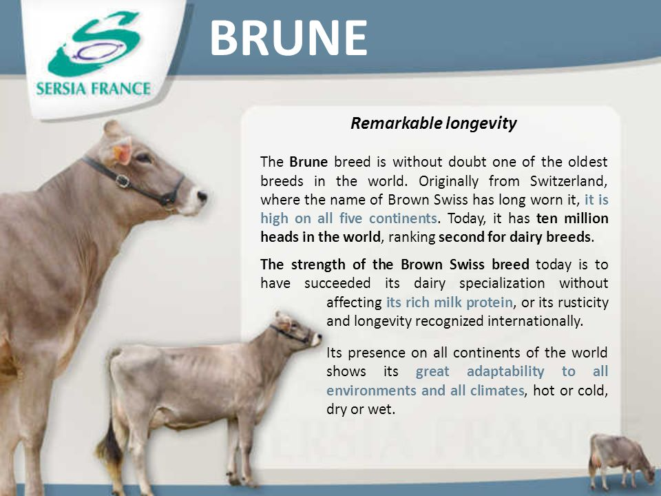 BRUNE Remarkable longevity