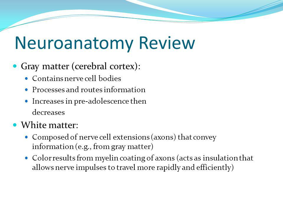 Neuroanatomy Review Gray matter (cerebral cortex): White matter: