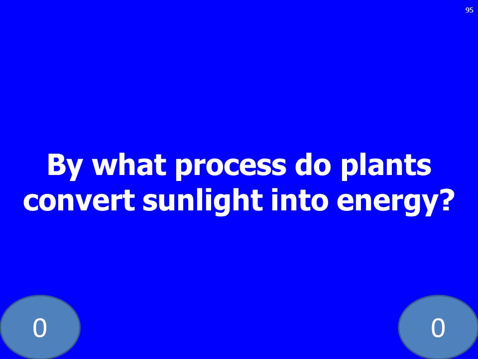 By what process do plants convert sunlight into energy