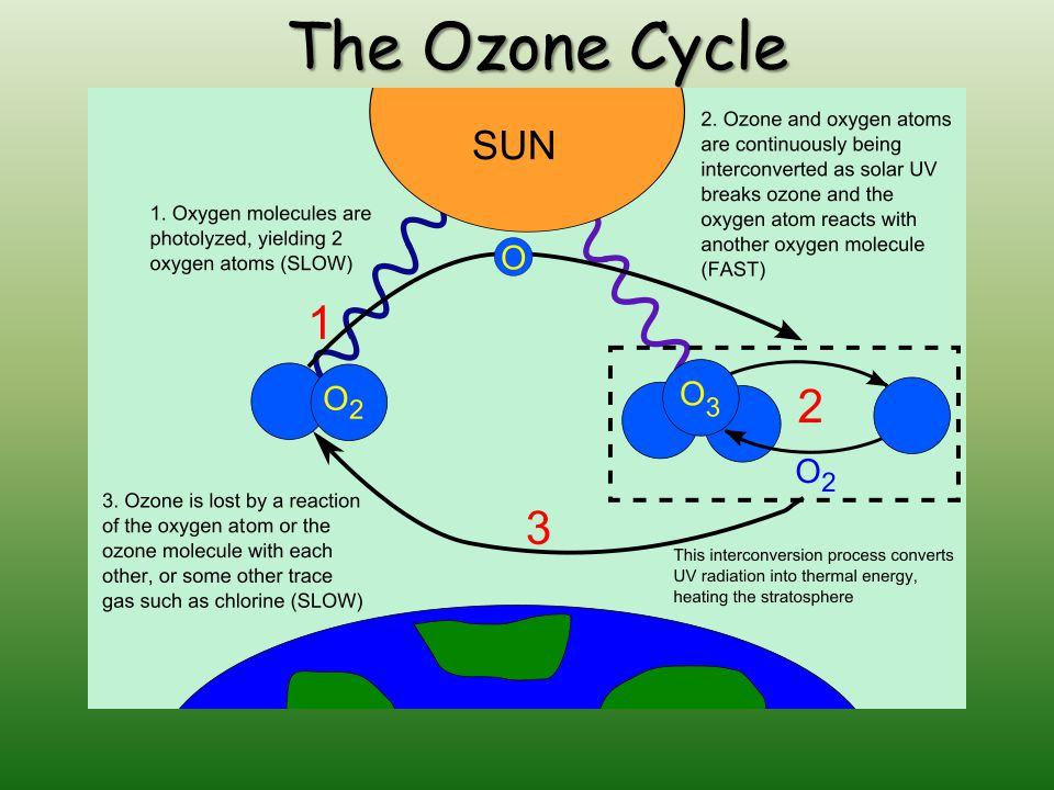 The Ozone Cycle