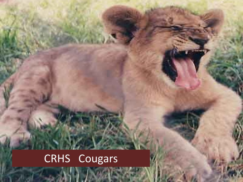 CRHS Cougars