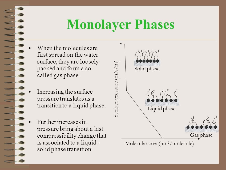 Monolayer Phases When the molecules are first spread on the water surface, they are loosely packed and form a so-called gas phase.