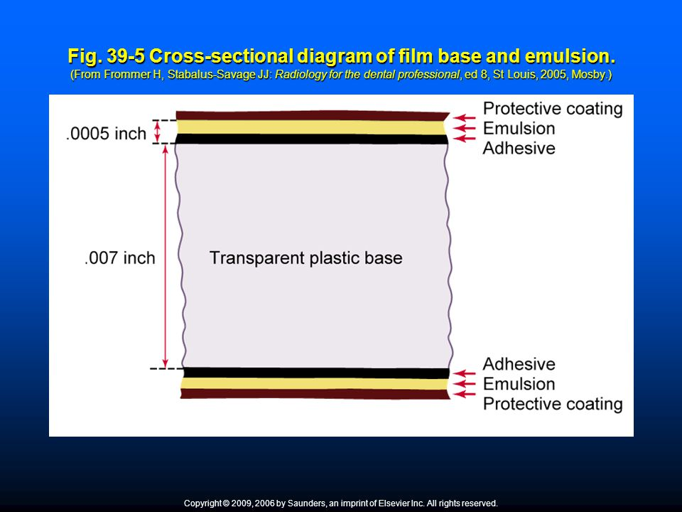 Fig. 39-5 Cross-sectional diagram of film base and emulsion