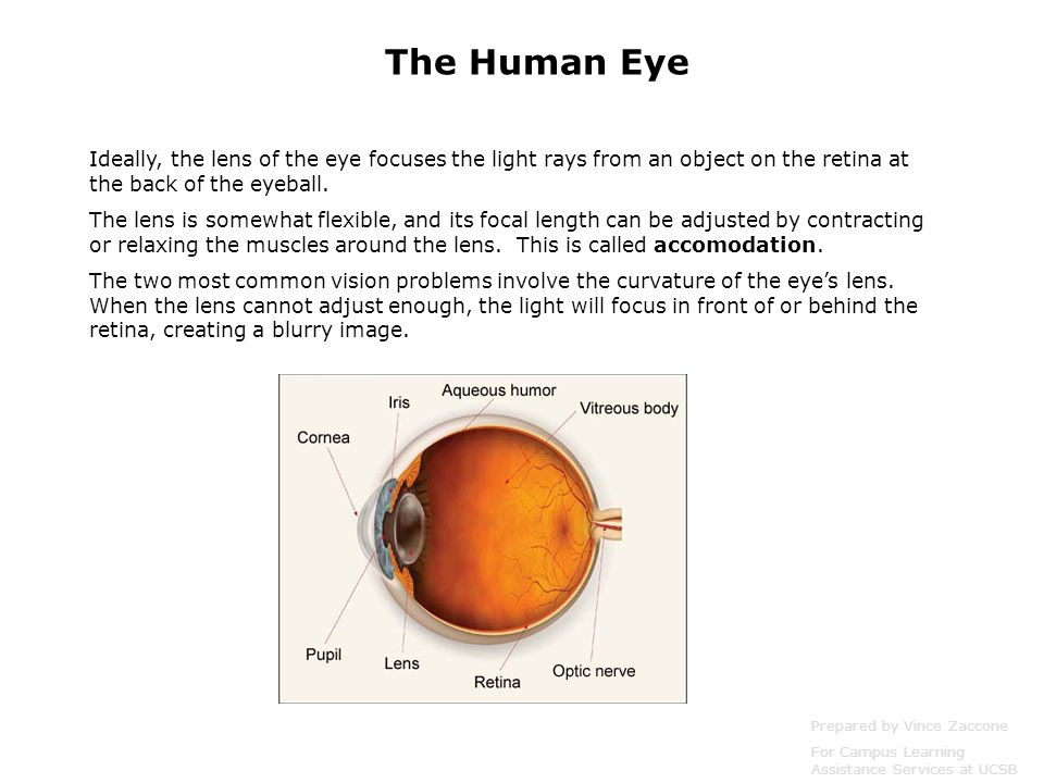 The Human Eye Ideally, the lens of the eye focuses the light rays from an object on the retina at the back of the eyeball.