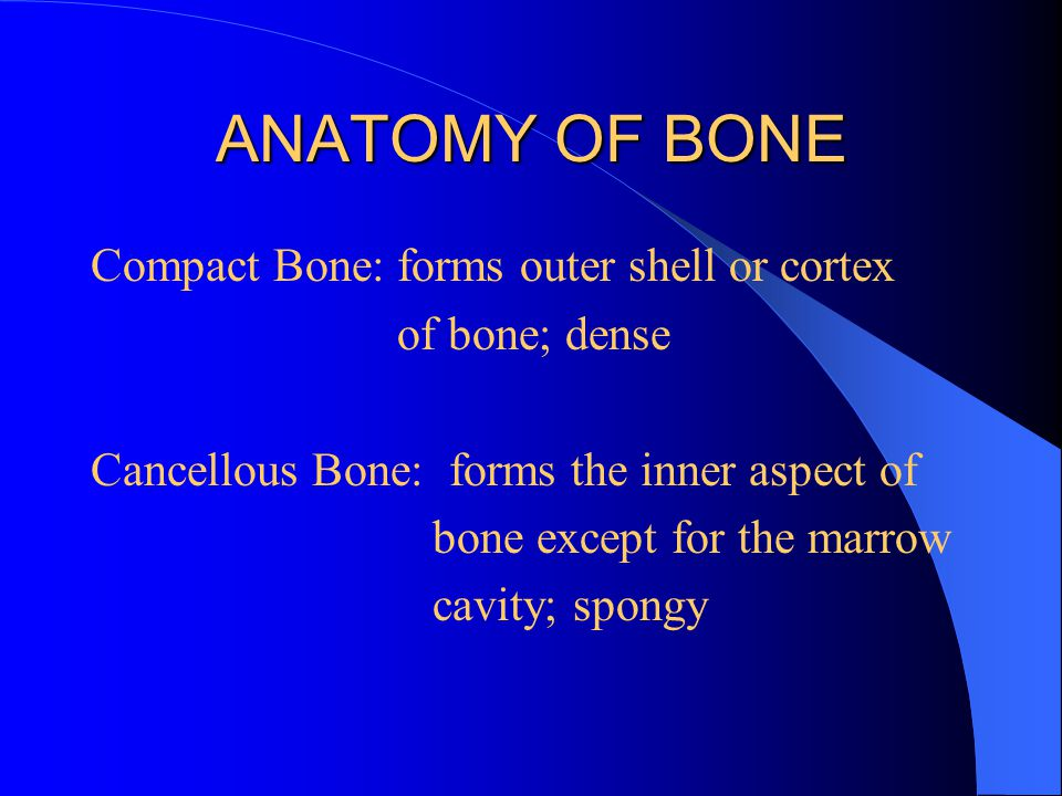 ANATOMY OF BONE Compact Bone: forms outer shell or cortex