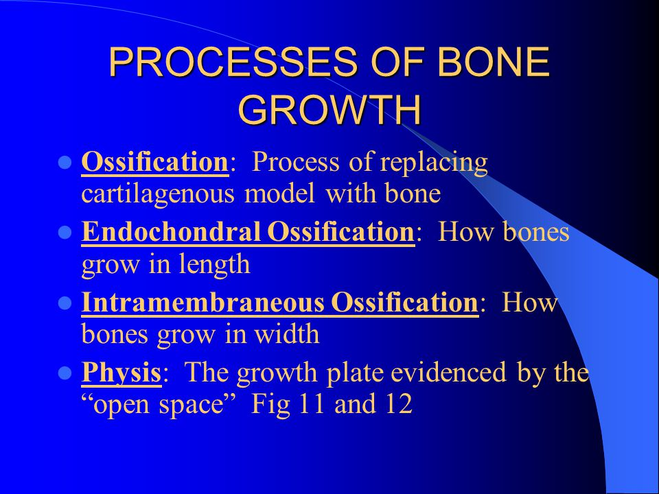 PROCESSES OF BONE GROWTH