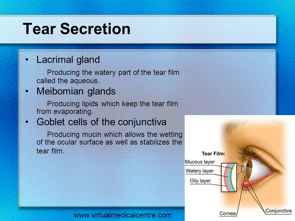 Tear Secretion Lacrimal gland