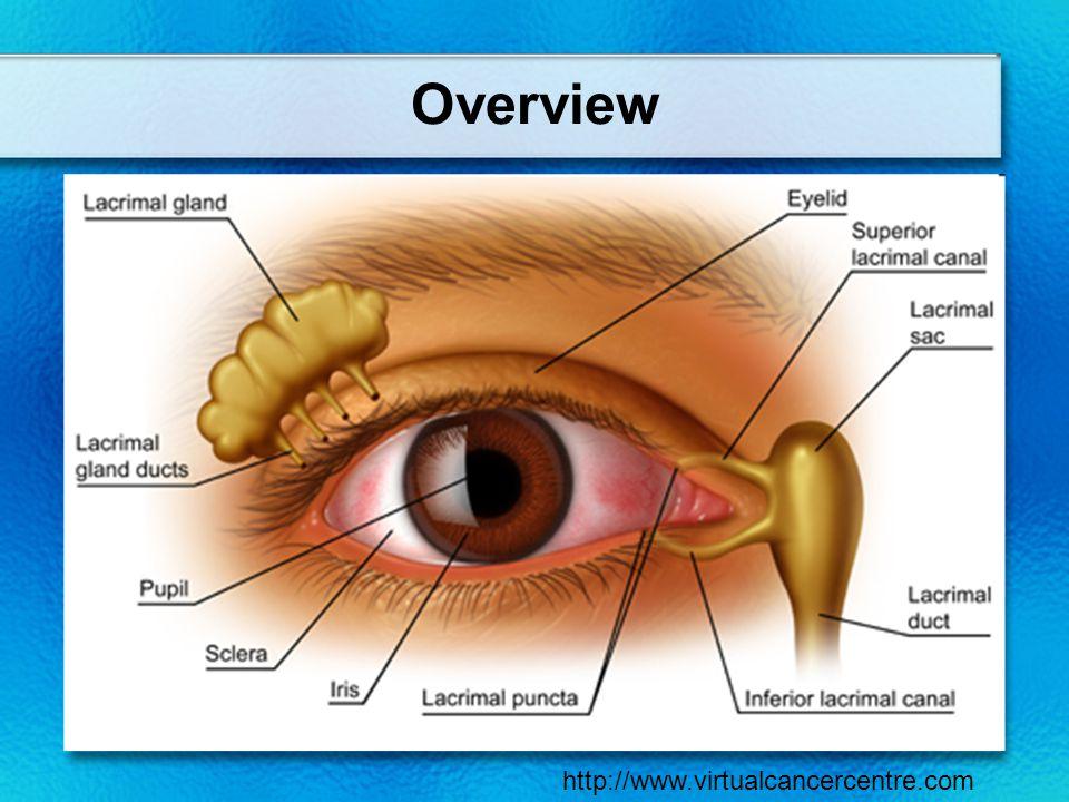 Overview http://www.virtualcancercentre.com