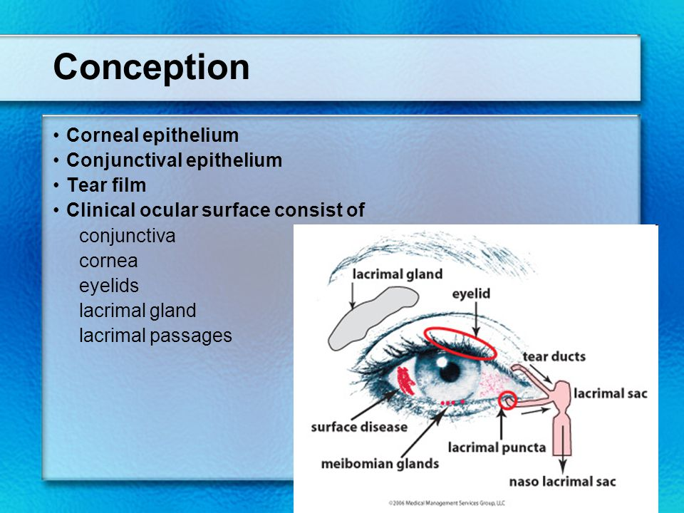 Conception Corneal epithelium Conjunctival epithelium Tear film