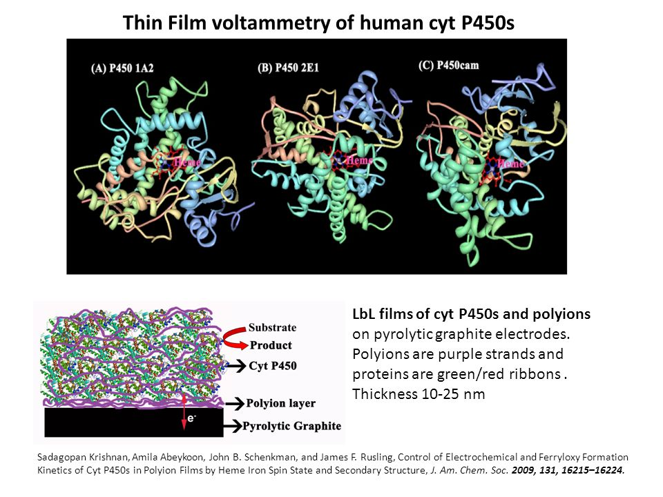 Thin Film voltammetry of human cyt P450s
