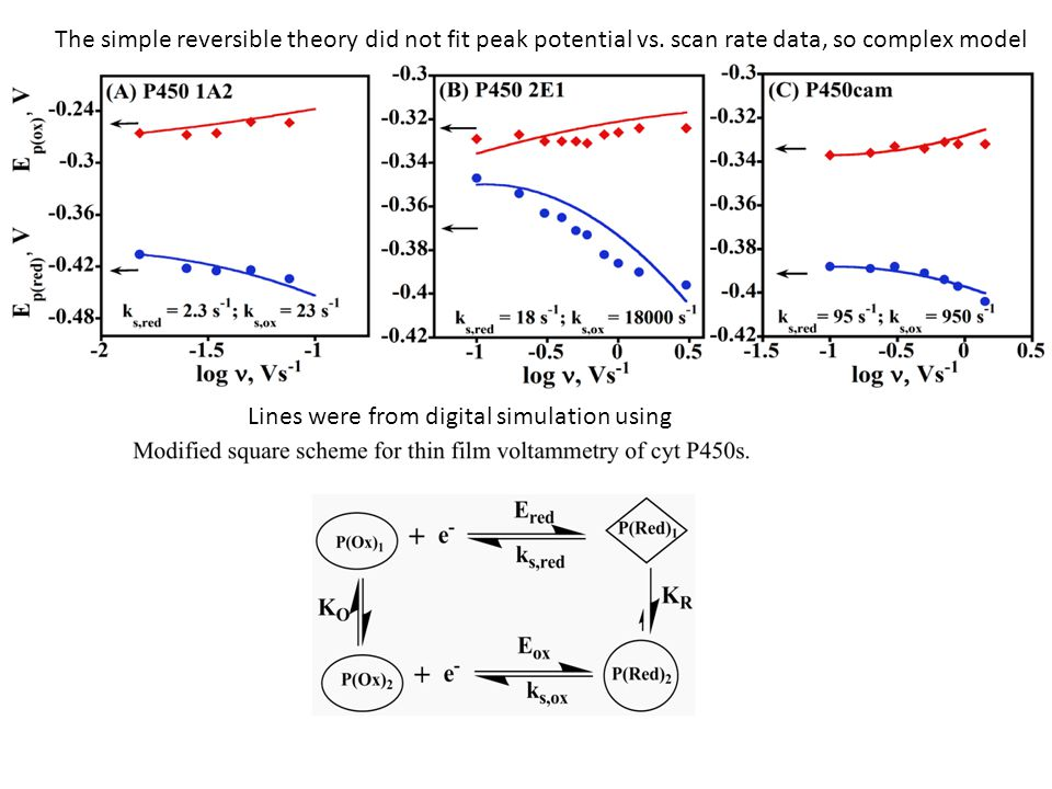 The simple reversible theory did not fit peak potential vs