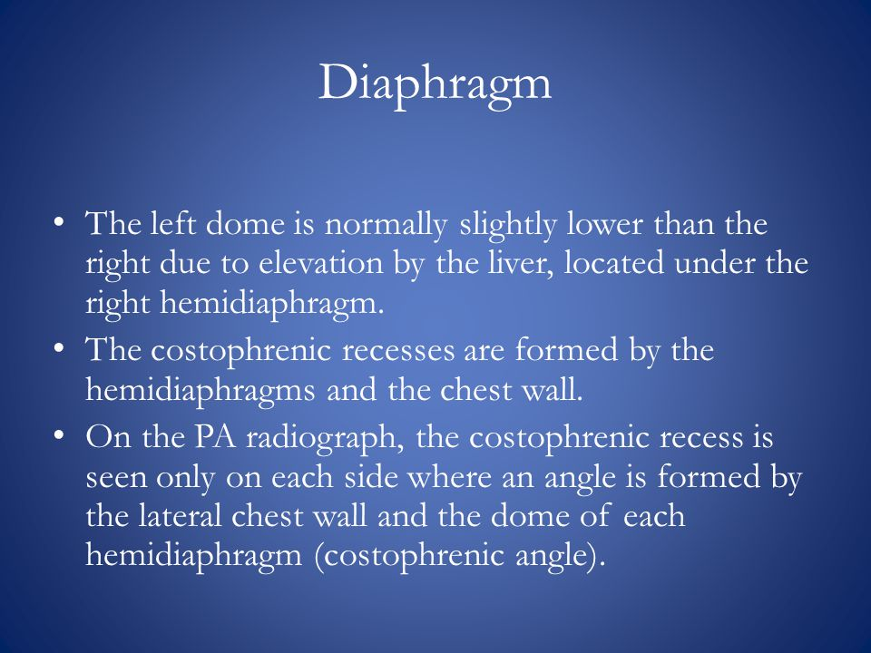 Diaphragm The left dome is normally slightly lower than the right due to elevation by the liver, located under the right hemidiaphragm.