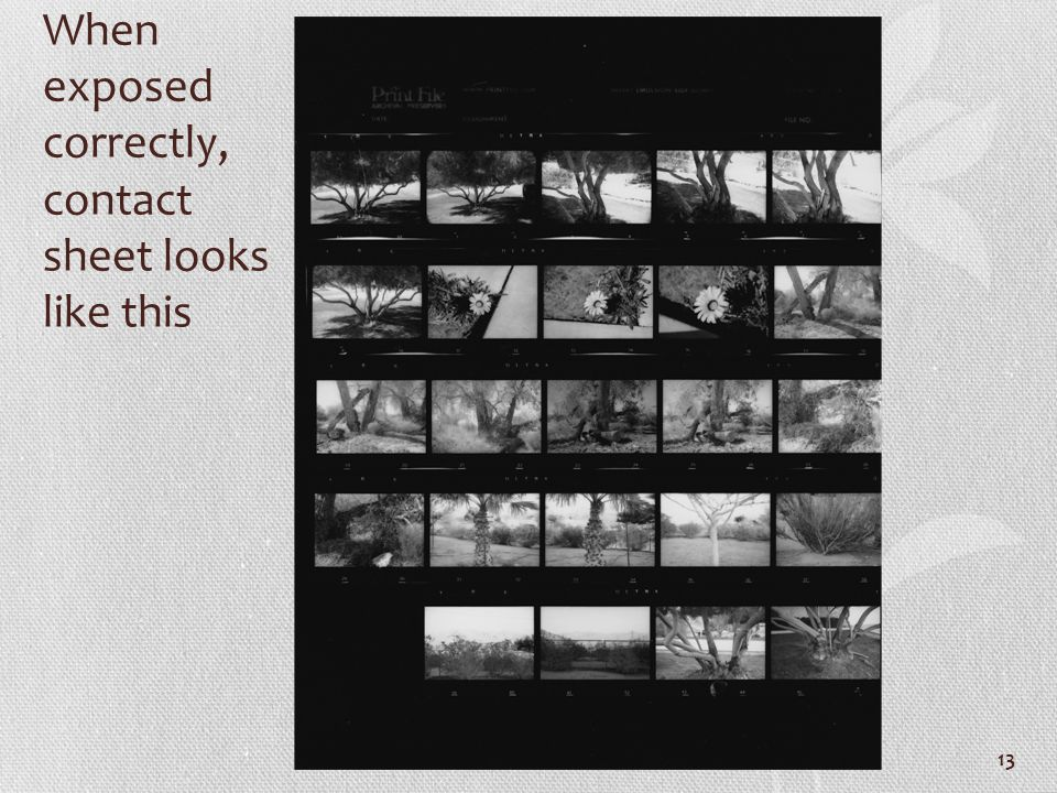 When exposed correctly, contact sheet looks like this