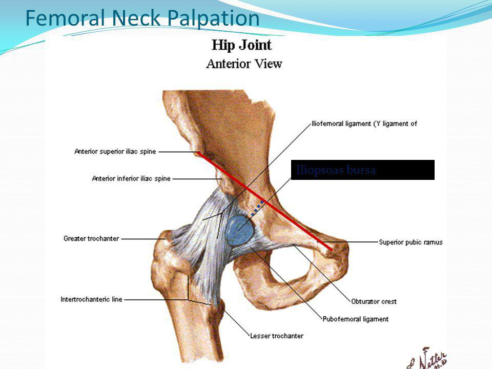 Anatomy of neck ppt 158346 - follow4more.info