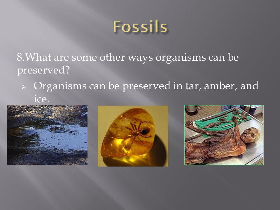 Fossils 8.What are some other ways organisms can be preserved