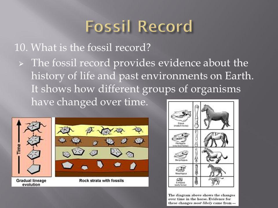 Fossil Record 10. What is the fossil record