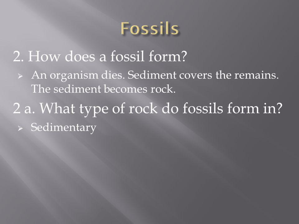 Fossils 2. How does a fossil form