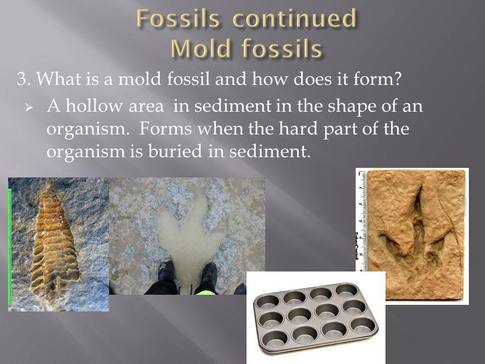 Fossils continued Mold fossils