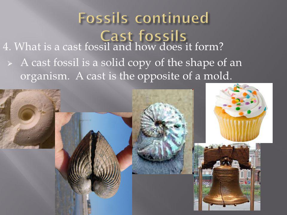 Fossils continued Cast fossils