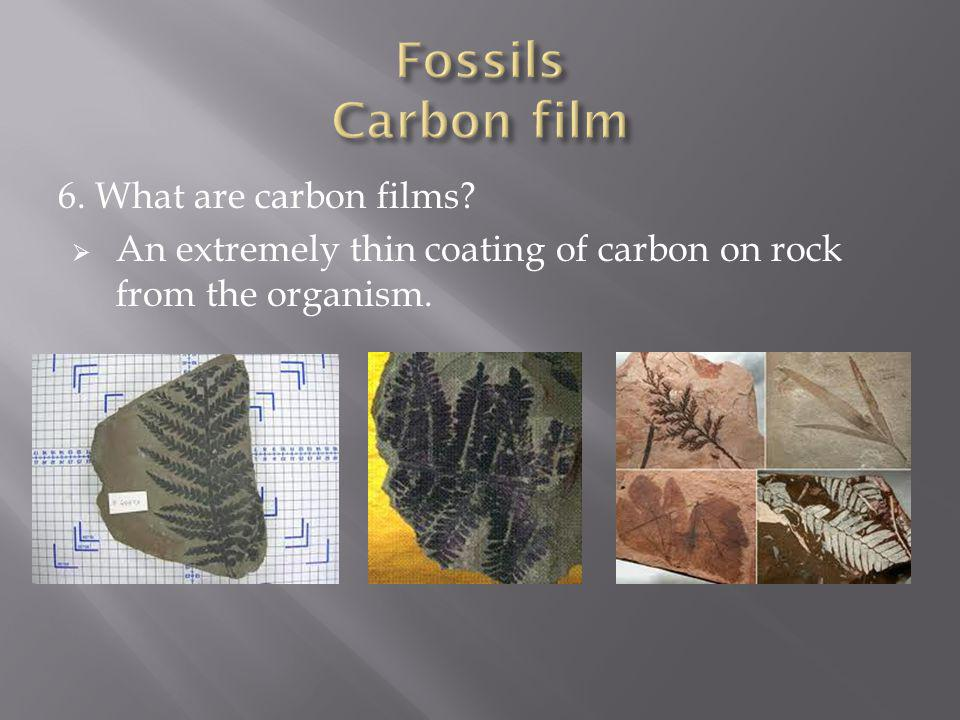 Fossils Carbon film 6. What are carbon films