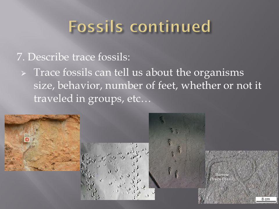 Fossils continued 7. Describe trace fossils: