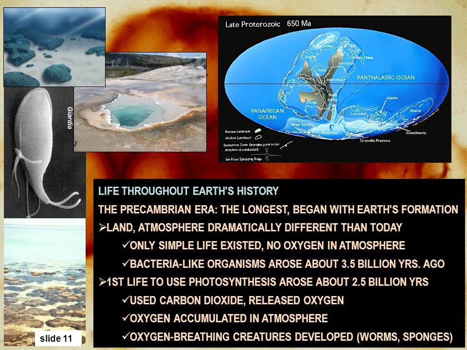 LIFE THROUGHOUT EARTH S HISTORY
