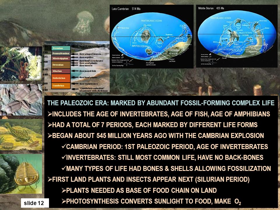 THE PALEOZOIC ERA: MARKED BY ABUNDANT FOSSIL-FORMING COMPLEX LIFE