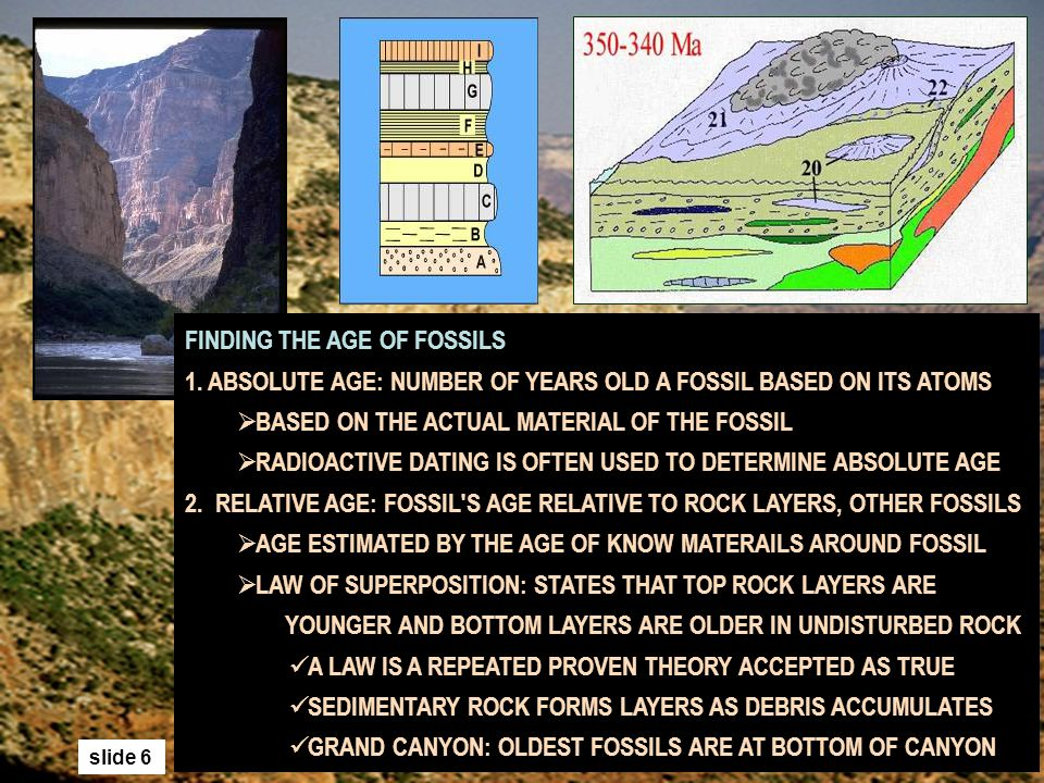 Carbon dating is used to determine the absolute age of a rock or fossil