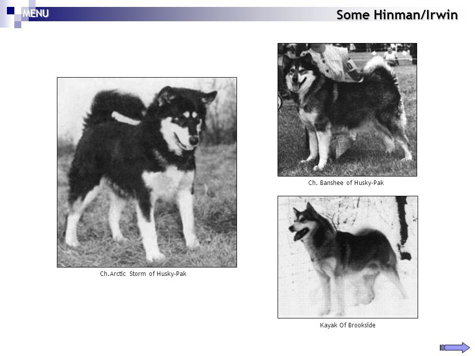 Some Hinman/Irwin MENU Ch. Banshee of Husky-Pak