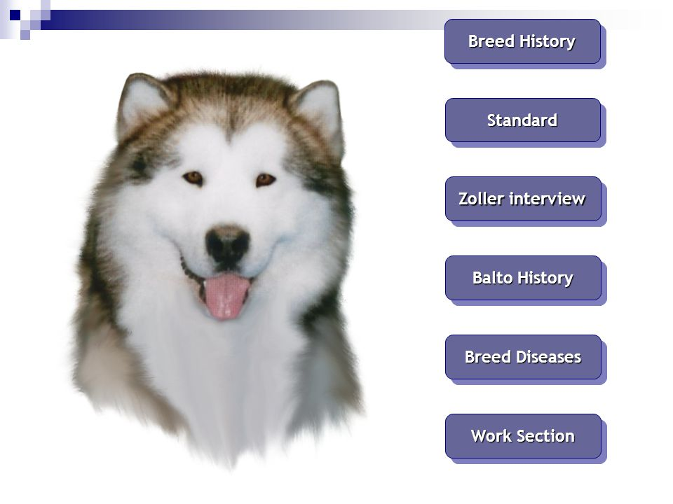 Breed History Standard Zoller interview Balto History Breed Diseases Work Section