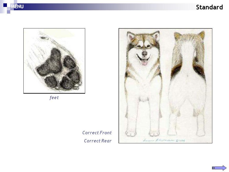 MENU Standard feet Correct Front Correct Rear