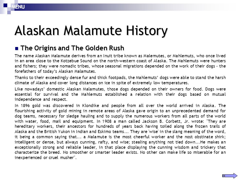 Alaskan malamute seminar ppt download for Alaskan cuisine history