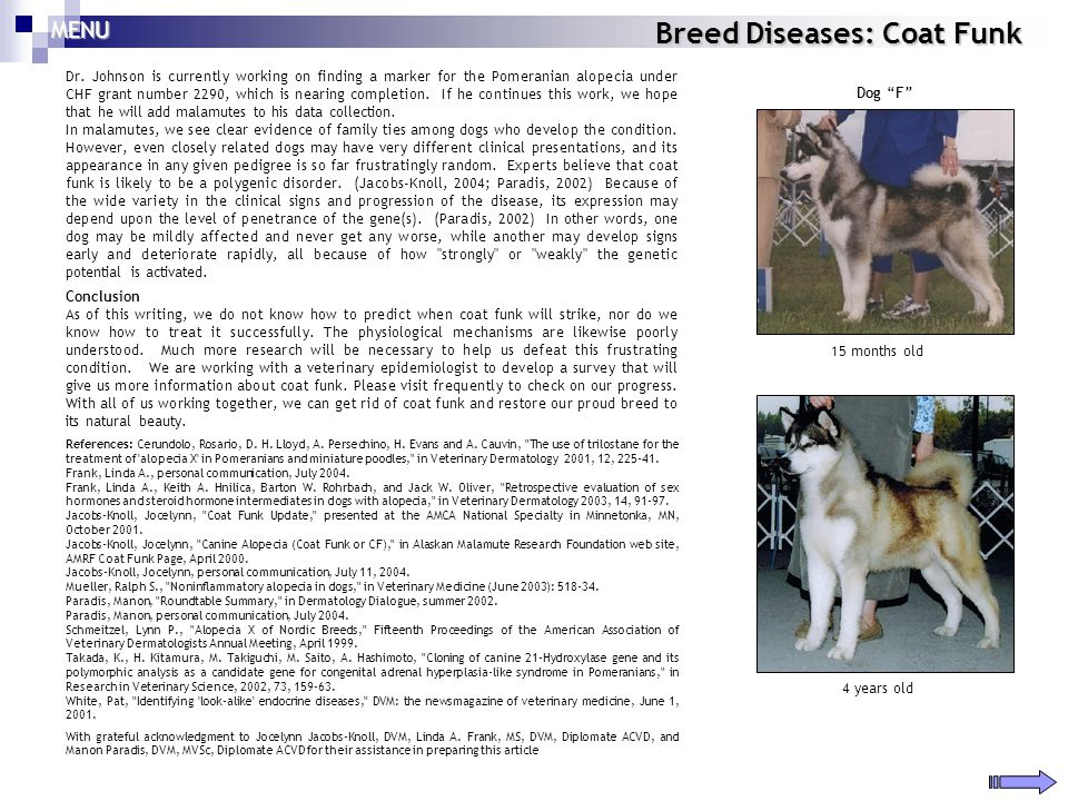 Breed Diseases: Coat Funk