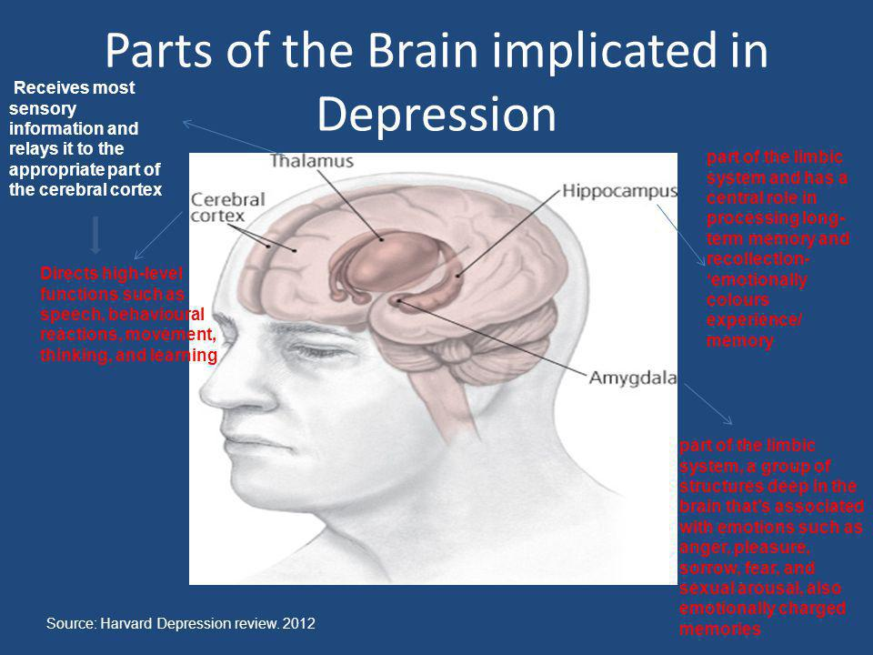 Parts of the Brain implicated in Depression