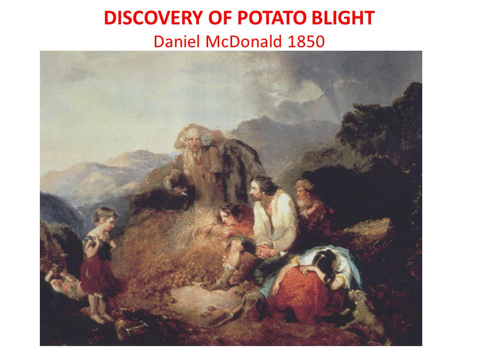 DISCOVERY OF POTATO BLIGHT Daniel McDonald 1850