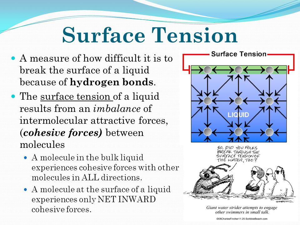 Surface Tension A measure of how difficult it is to break the surface of a liquid because of hydrogen bonds.