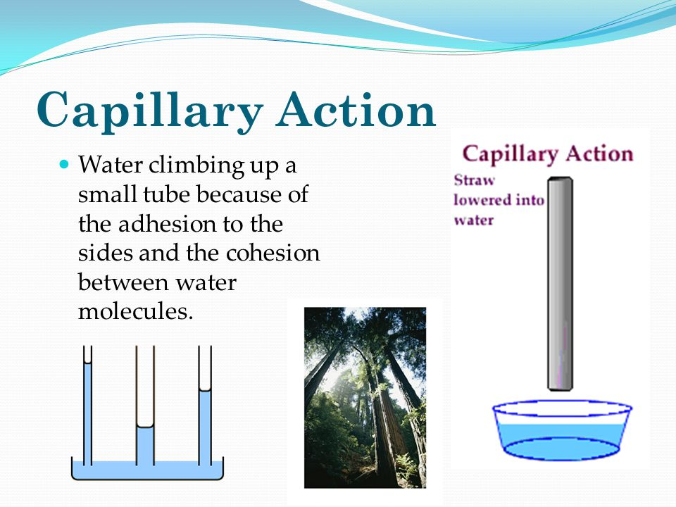 Capillary Action Water climbing up a small tube because of the adhesion to the sides and the cohesion between water molecules.