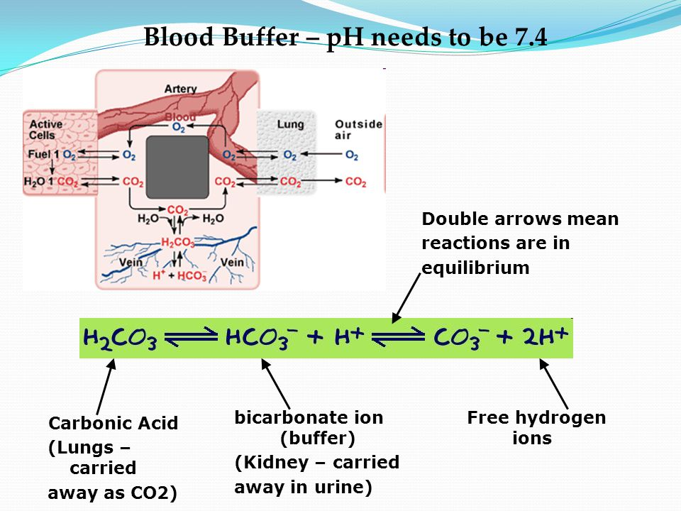Blood Buffer – pH needs to be 7.4